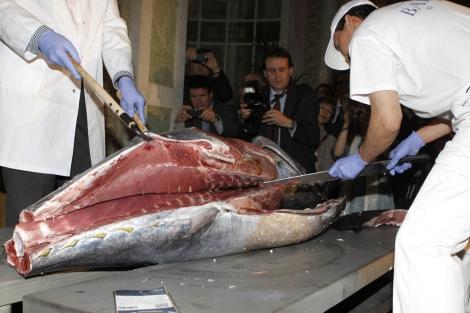 Dos técnicos realizan el ronqueo de un atún rojo de 140 kilogramos. | Efe