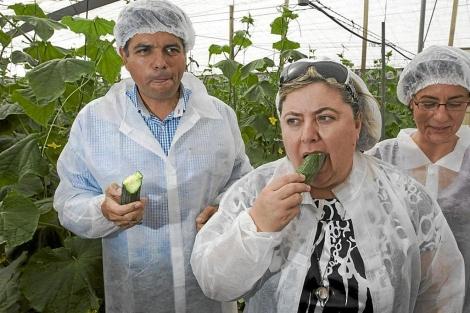 La consejera anzaluza de Agricultura visita una plantación de pepinos. | Efe