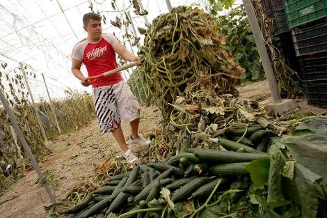 Un agricultor, en una de las plantaciones almerienses. | Reuters