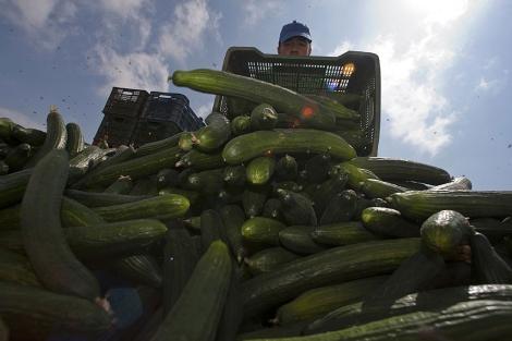 Un agricultor, en El Ejido. | Reuters