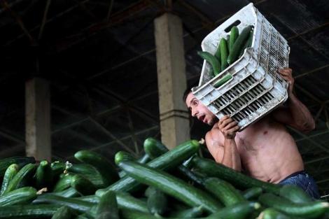 Un trabajador desecha una caja de pepinos, cerca de Bucarest.  Efe