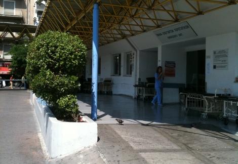 Los cuatro arbustos plantados a la entrada del hospital Evagelismos, en Atenas. | I.H.V