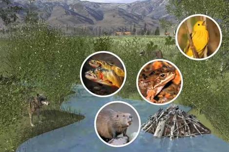 Recreación de un ecosistema en el Parque de Yellowstone (EEUU). | Science.