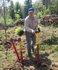 Reforestación de árboles en Umea. | T.G