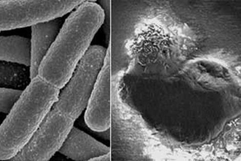 Bacterias 'E. Coli' (izda), y la acción de las nanopartículas en la célula bacteriana (dcha.).   S. Trigueros / S. C.