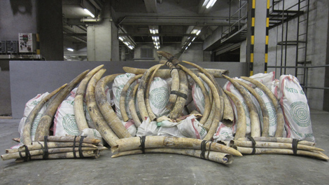 Un cargamento de marfil en Hong Kong.   Afp