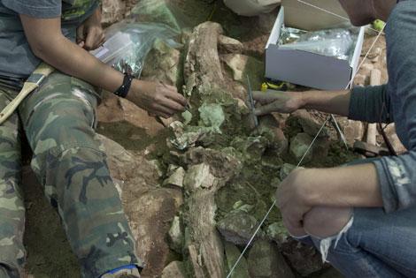 Un fósil hallado en las excavaciones de Pinilla. | A. Heredia