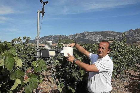 Julio Sáen, enólogo del grupo Rioja Alta, estudia los datos obtenidos. | Paulino Oribe
