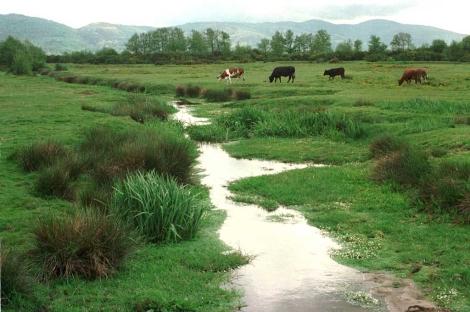 Vacas pastando en los humedales de Rairiz de Veiga (Orense). | Rosa Lía