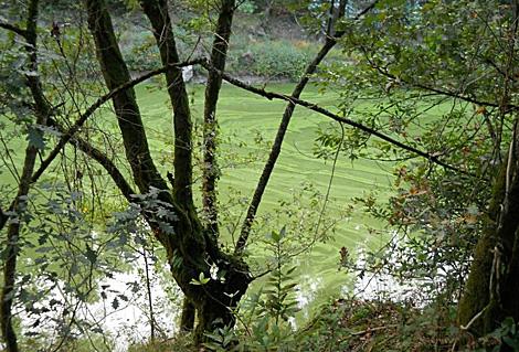 Aspecto del agua en la cola del embalse, en Moraña. | Encoro