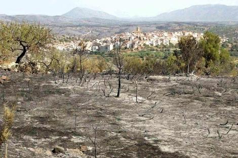 Las llamas calcinaron término forestal de seis municipios de Castellón.   Juan Martí