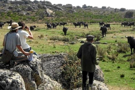 Visitantes observan vacas sayaguesas en Zamora.   EL MUNDO