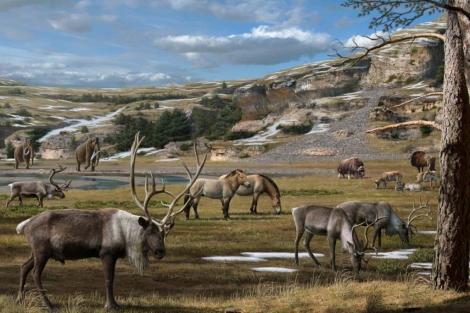 Reconstrucción de la fauna del Pleistoceno en Eurasia, con renos, tarpanes, bisontes, mamuts y bueyes almizcleros.   Mauricio Antón