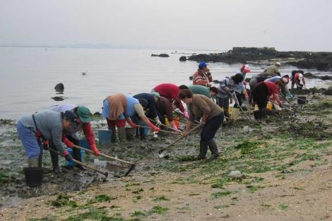 Un grupo de mariscadoras recoge berberecho en una de las pesquerías MSC. | EL MUNDO