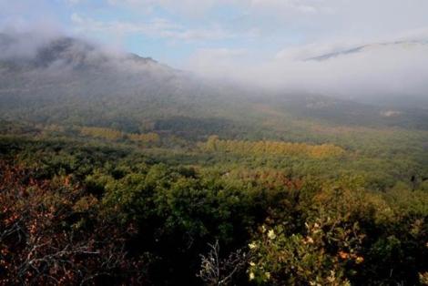 Bosques de La Herrería desde la Silla de Felipe II. | Marga Estebaranz