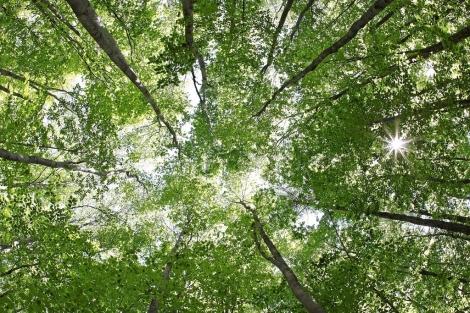 Las familias son como árboles, algunas crecen hasta florecer y otras se mueren.