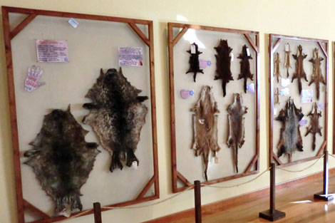 Parte del catálogo de pieles de animales expuesto. | R.S.