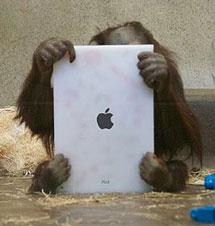 Foto: 'Orangutan Outreach'.
