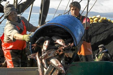 Pescadores chilenos descargan jureles recién pescados. | M. Rosenblum