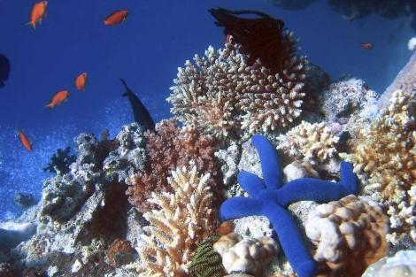 La Gran Barrera de Coral de Australia.   Richard Ling