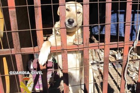 Los animales estaban en un espacio reducido y en malas condiciones. | ELMUNDO.es