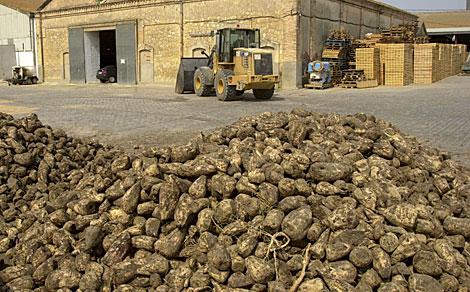 Patatas viejas amontonadas en unas instalaciones agrícolas.