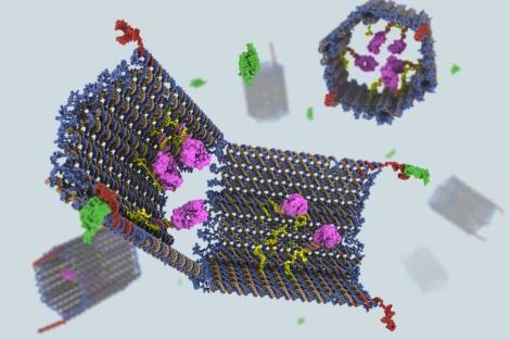 El nano-robot fabricado a partir de ADN. | C. Strong/S. Douglas/G.McGill