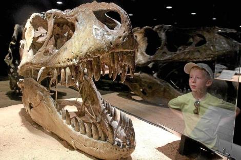 Cráneo de un 'T-rex' expuesto en el Museo CosmoCaixa de Barcelona. | Jordi Soteras