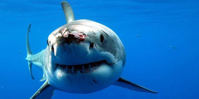 Imagen de un tiburón en las profundidades. | ELMUNDO