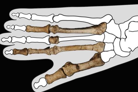 Los fósiles del pie de hace 3,4 millones de años, en la plantilla de un pie.| Nature
