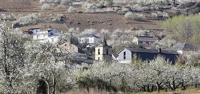 La localidad de Corullón, en la hoya berciana, servía esta semana así su manto blanco floral. | Ical