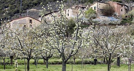 Cerezos florecido en el Valle de Caderechas, en Burgos.