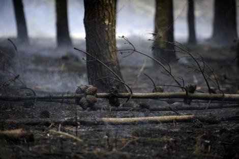 Árboles quemados en el bosque gallego.| Afp