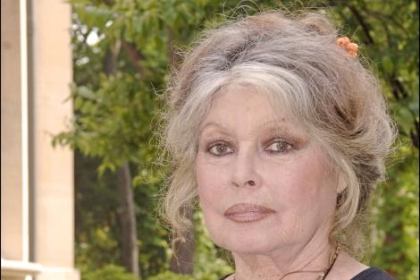 La actriz vive volcada en la defensa de los animales. | Gtres