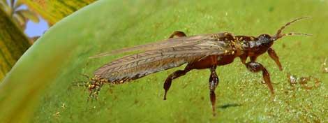 Reconstrucción de los insectos del Cretáceo encontrados en Álava. |IGME