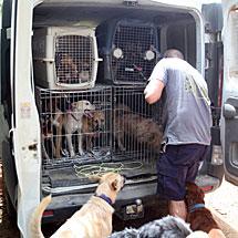 Los perros recién sacados de la perrera.   J.M.