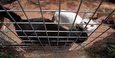 También hay gatos en el refugio de Ayandena.   Jesús Morón