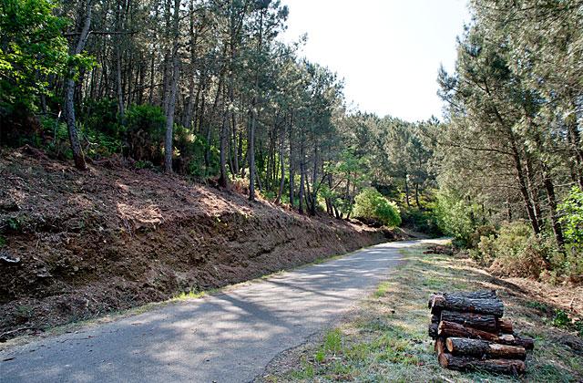 Trabajos de limpieza del monte realizados por las BRIF en Laza (Ourense).   Óscar Pinal