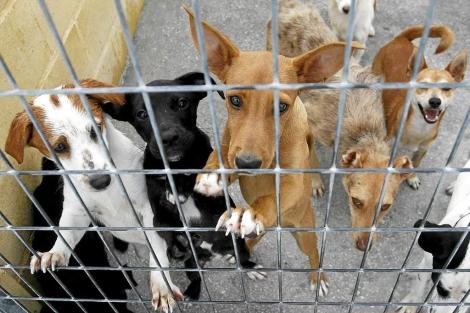 Imagen de varios perros, en una perrera de Valencia.