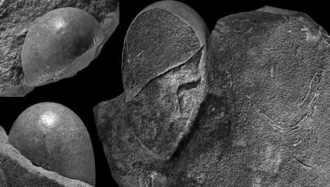 Fotografías de un ejemplar de huevo de dinosaurio Sankofa pyrenaica. | UAB-UCM