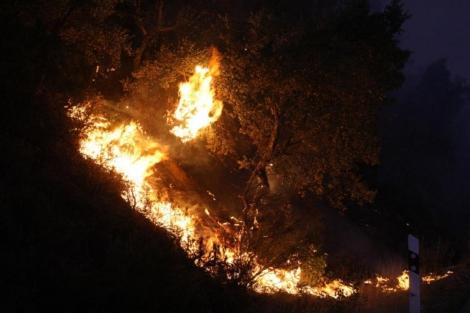 Las llamas arrasan el bosque en La Junquera.| Afp