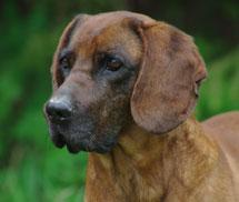 El perro Buck.   Roberto Permunian/CSIC