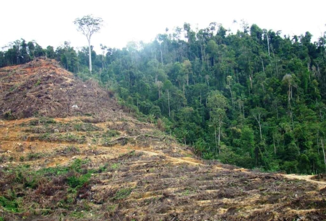 Zona aledaña deforestada de un Parque Nacional en Malasia. | Nature