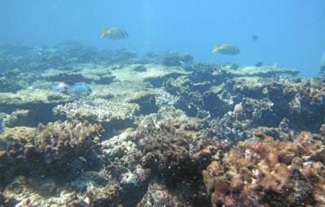 Arrecifes de coral amenazados. | Science