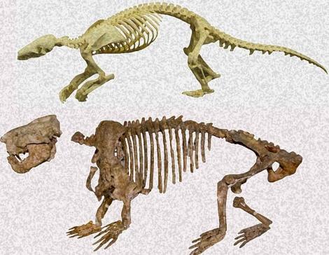 Comparación entre el oso hormiguero con escamas (arriba en la imagen) y el 'Ernanodon' (abajo). | Peter Kondrashov