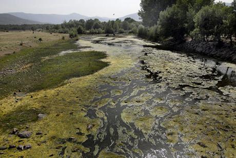 El río Lozoya a su paso por Alameda del Valle. | Alfredo Merino
