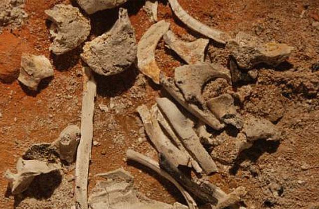 Fotografía de los huesos tomada por la Policía.