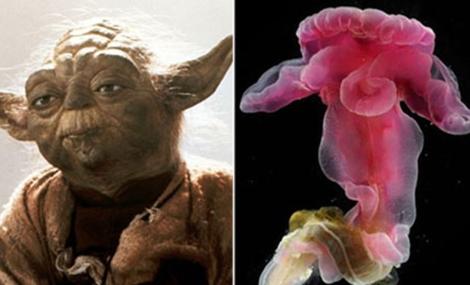 Parecido entre los labios del gusano y las orejas de Yoda.   EM