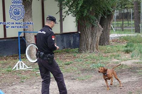 Uno de los perros policía, con su adiestrador. | CNP