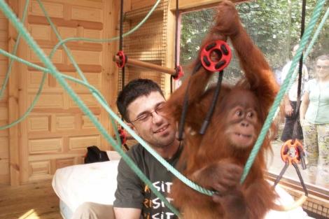 Pablo Herreros, jugando con un colega orangután.   El Mundo